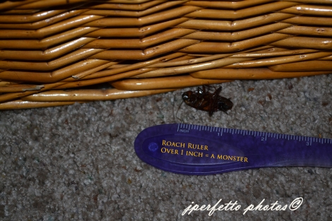 roach dead 2